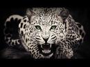 Классный фильм! Леопард - Одиночка.  Документальные фильмы в хорошем качестве.