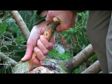 Bushcraft Skills for long term Wilderness Survival: How to make a bark container for cooking food.
