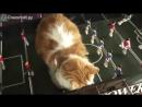 Смешные спящие кошки