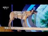 Собака по кличке Хари стала участником программы «Вызов невозможному»