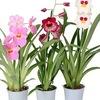 Комнатные растения-цветы, озеленение-фитодизайн