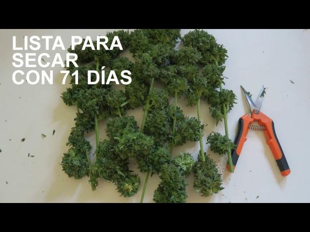 RHINO RYDER DE FAST BUDS CON ABONOS FAST FOOD DE B.A.C.
