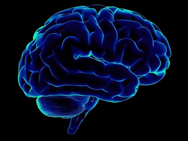 3D Анатомия человека - мозг. 3D Anatomy human - brain.