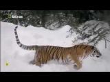 La Familia Felina Big Cats Episodio 1