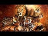 El nacimiento de la familia  Big Cats  La Familia Felina  Episodio 1