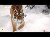 Big Cats La Familia Felina  Capitulo 1.- El nacimiento de la familia