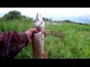 Короткая рыбалка на джиг после работы. Порадовала резина ALLBLUE.