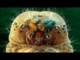 Видео жук убил и ест муравья мексиканца, стена трампа спасёт миллионы жизней его...