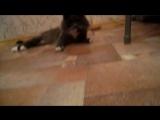 Мой кот дурак!