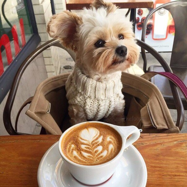 Де випити смачної кави коли