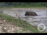 #Хорошечный слон