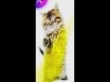 KSHMR &amp Tigerlily - Invisible Children (Ben Morrison Club Edit 2017)