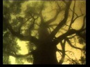 Арт - проект Живые - Вороны (Linkin Park - Blackbirds, russian cover, unofficial)