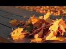 АСМР. Шелест листьев. Шорох опавшей листвы 2 часа