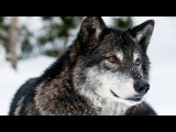 Original Mix SharaX - Dance With Wolves