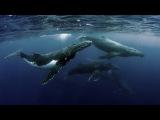 Дельфинов и китов могут выкинуть из Красной книги!