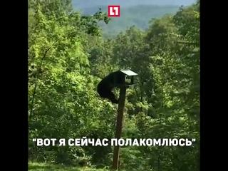 Медведица учит детёнышей воровать еду у птиц
