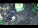 Амиачная Селитра поможет избавиться от пня без корчевки