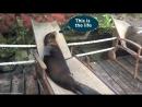 Морские львы нежатся в шезлонгах на Галапагосах