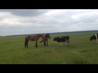 Вира, Кузя и бычки