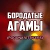 Бородатые агамы (Pogona vitticeps)