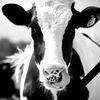 Зоотехния. Кормление и содержание с/х животных