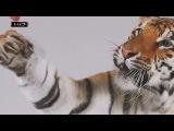 Он ест медведей и носит таинственный знак на лбу - Тигр
