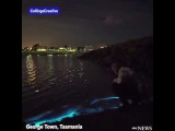 MESMERIZING Bioluminescence caused by a living organism in the water shines a dazzling blue light
