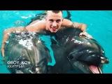 Плавание с дельфинами в Спб