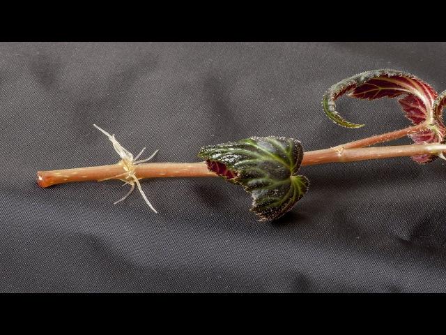 Нюансы укоренения черенков растений. Самые распространенные ошибки.