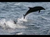 Dolphins in the Black Sea. Дельфины. Перспективное место для отдыха с палаткой и не только. DJI