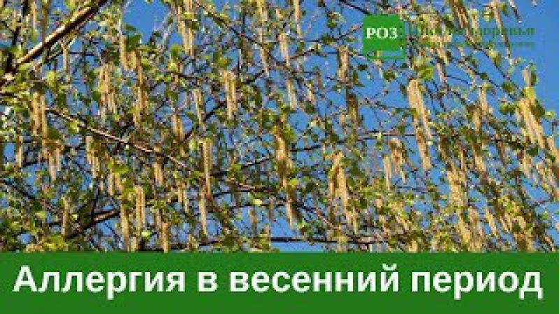 Аллергия в весенний период. Лекция В.Г. Остроумовой (13.05.17)