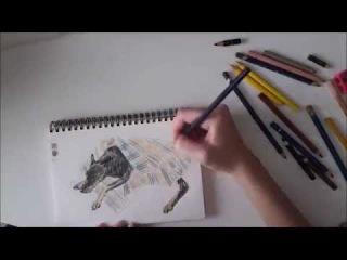 Рисую добермана