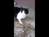 кося и двое котят в подвале молят о помощи!