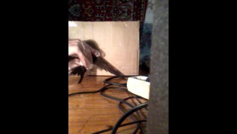 Video-2011-01-06-20-50-32
