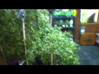 #EA7VIDEO - Внук садовод 🌿