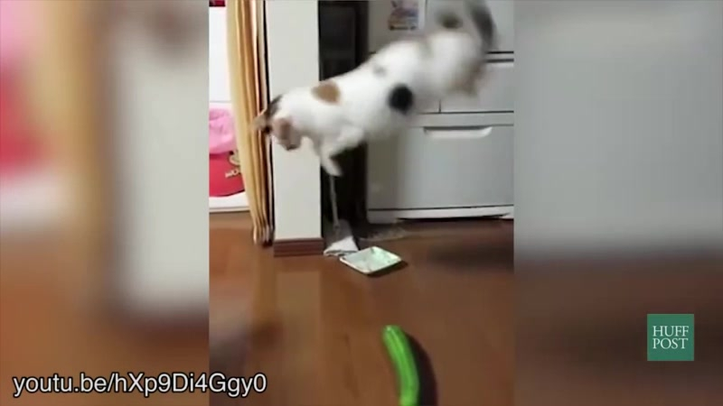 Cats vs cucumbers