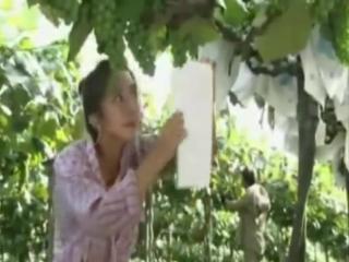 K-Drama: The Vineyard Man