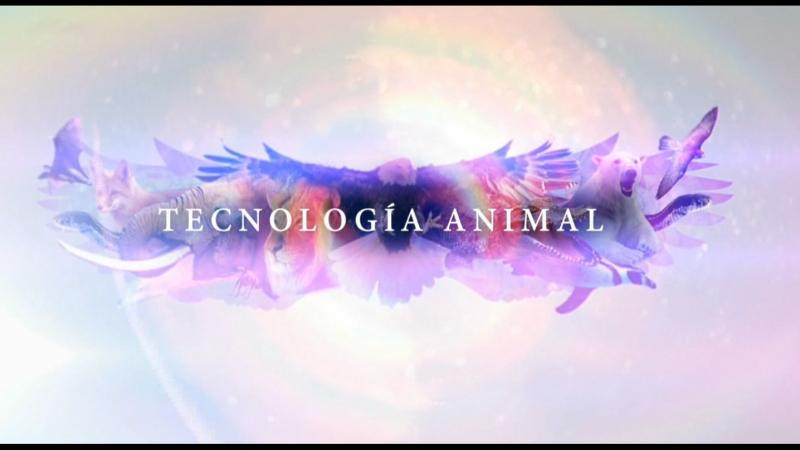 Tecnologia animal I. Depredadores