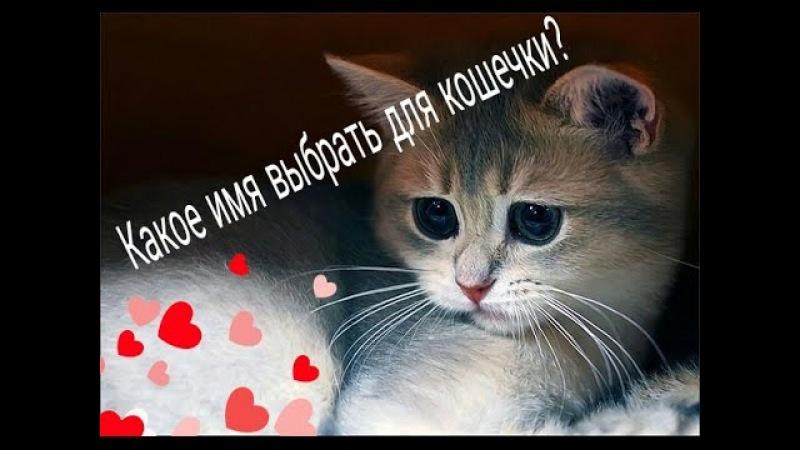 Какое имя выбрать для кошки, кота? Что самое главное в кличке котёнка?