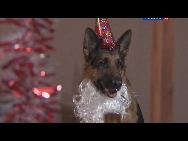 Лорд Пёс полицейский сезон 1 серия 21