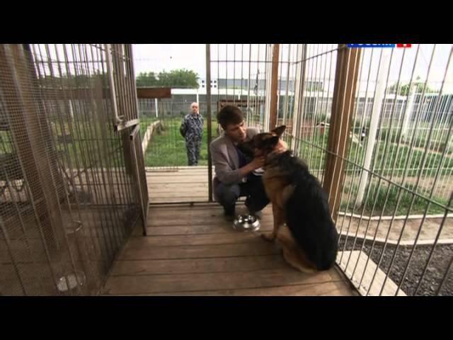 Лорд. Пёс-полицейский сезон 1, серия 2