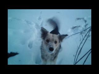 Пёс Виктор во плоти