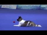 Евразия 2017 Чемпионат РКФ по танцам с собаками Першина Елена &amp Жасмин Кисаки