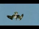 воздушный охотник