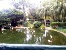 Парк фламінго