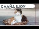 Слайд шоу ваши домашние животные. Для детей. Слайд шоу с котятами. Слайд шоу для кошки, собаки / и тд.