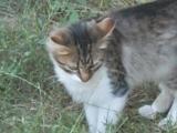 Tom and Jerry в Молдове