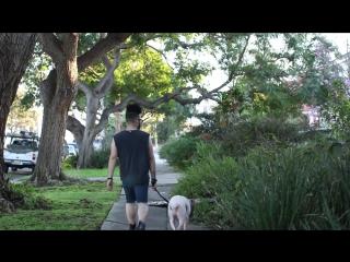 Жизнь с собакой и без