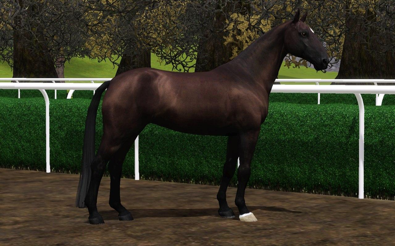 Регистрация лошадей в RHF 2 - Страница 2 DKlJpWbdbgM